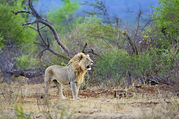 Yervant Photography workshop and Safari