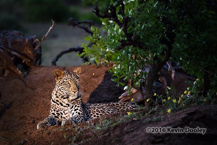 Mashatu Photography