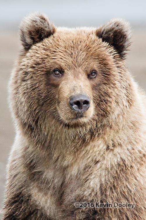 Alaska Bear Photo Tours