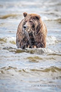 Alaska Bear Photo Tours