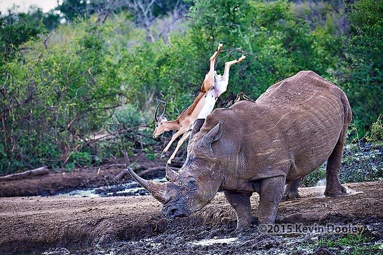 Photo Gear for An African Safari