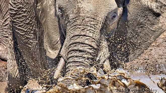 African Photo Safari. Banjo Safari Big Success.