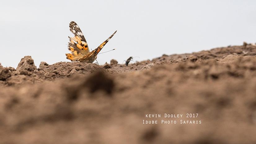 African photo Safaris