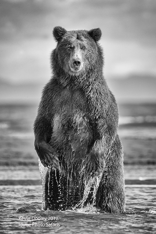 Bear Photography