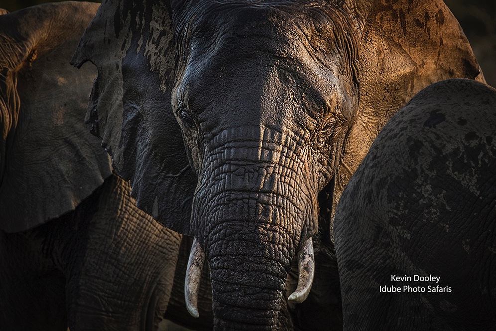 African Safaris Elephants