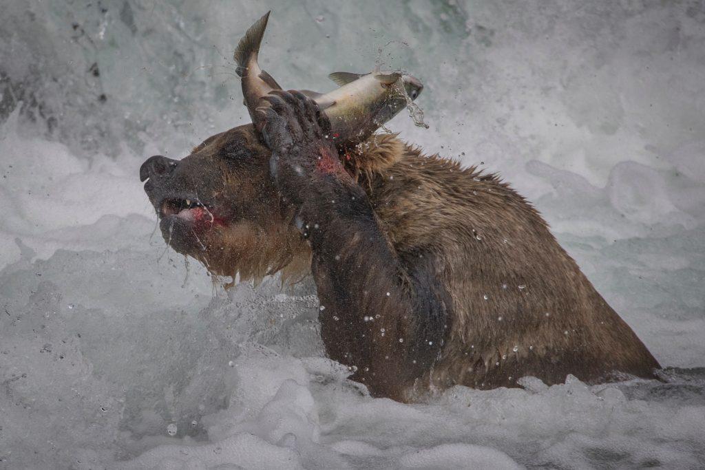 Bear Photography
