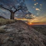 Jim Nix Luminar Safari