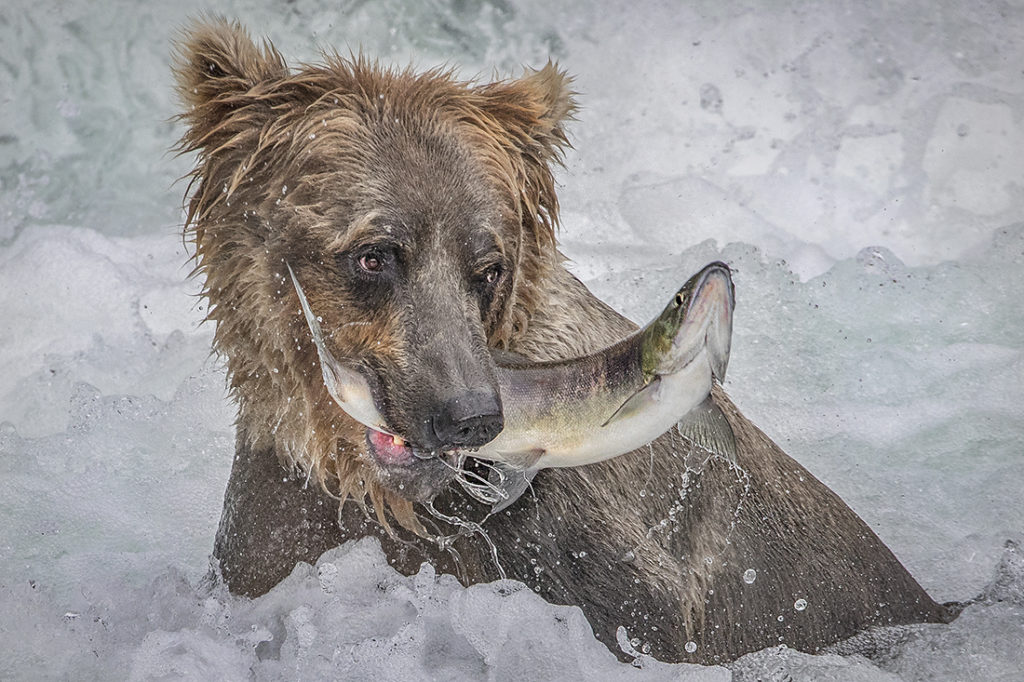 Bear with Fish