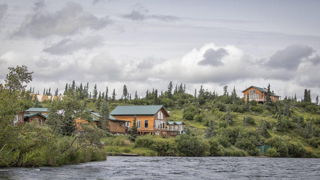 Alaska Brown Bear Photography