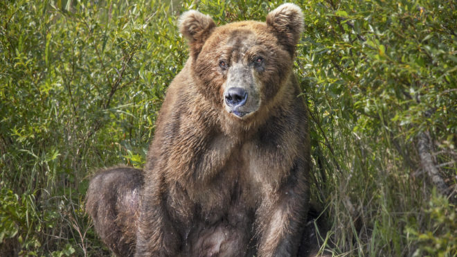 Alaska bear photography: An Interview with Kevin Dooley