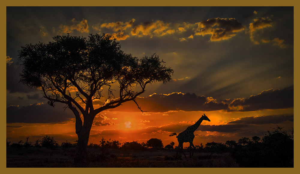 Friends of Nature Best of Botswana Safari