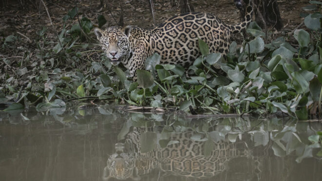 Photographing in the Pantanal