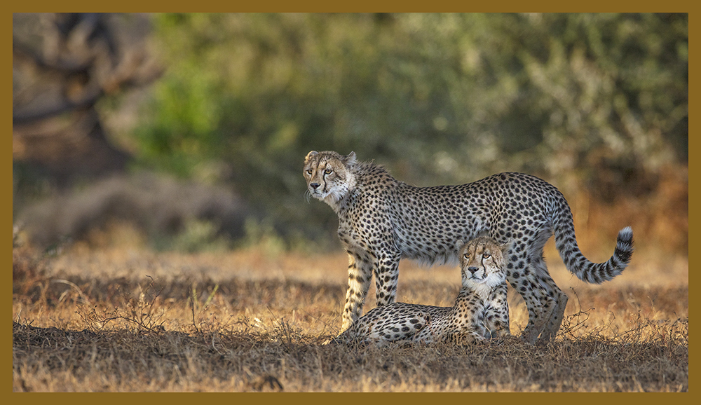 ProMediaGear African Safari