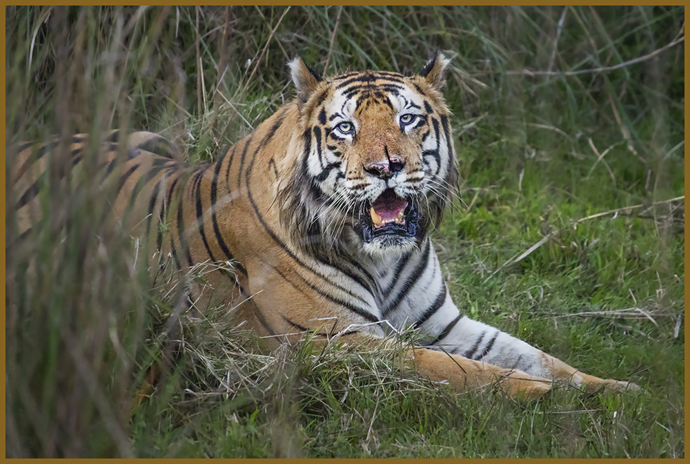 The Best Of India wildlife and Tigers Tour