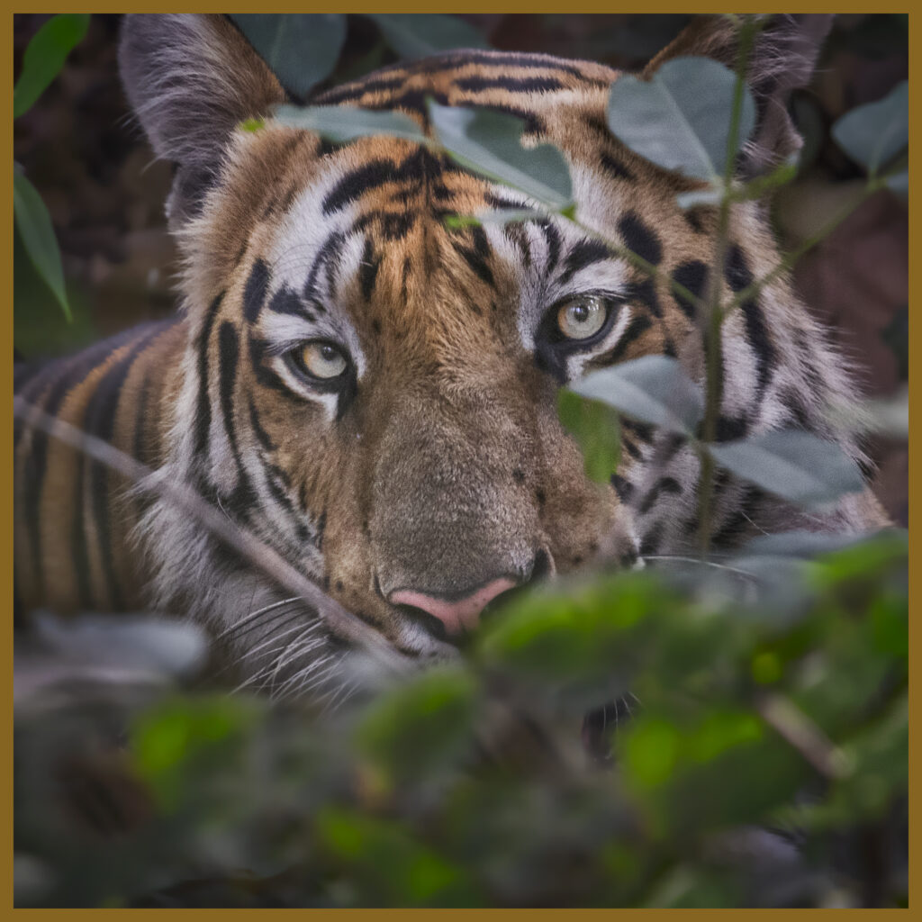 The Best of India wildlife and Tigers photography tour