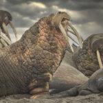 Walrus Photography