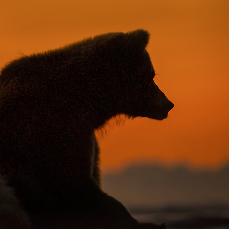 Photographing Brown Bears