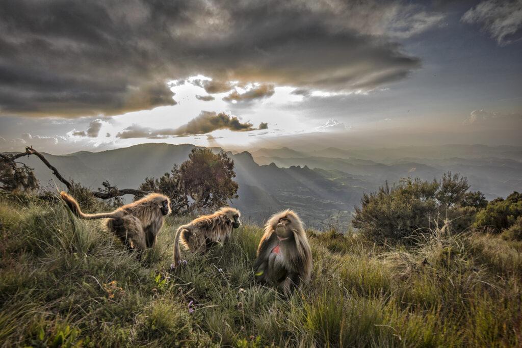 Ethiopia Wildlife Tour