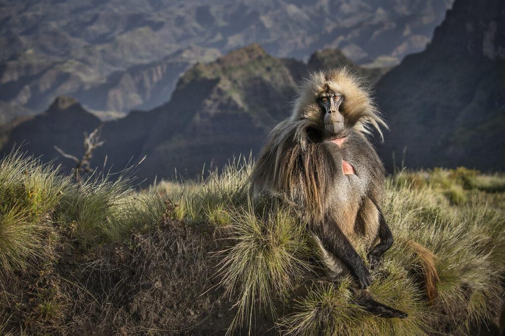 Ethiopia Wildlife photography