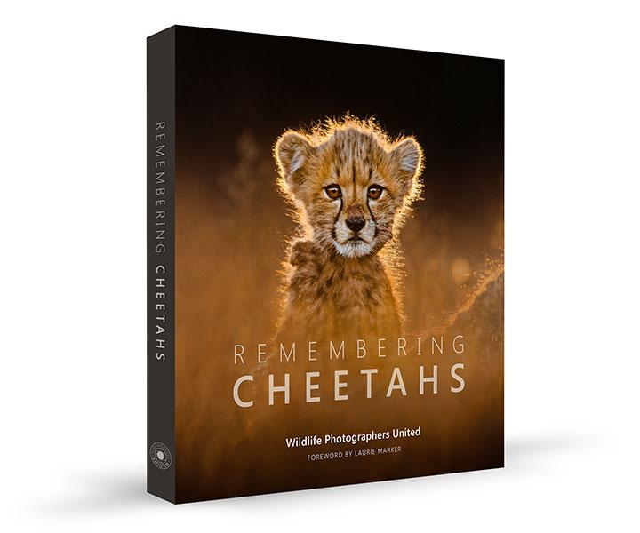 Kevin Dooley Remembering Cheetahs