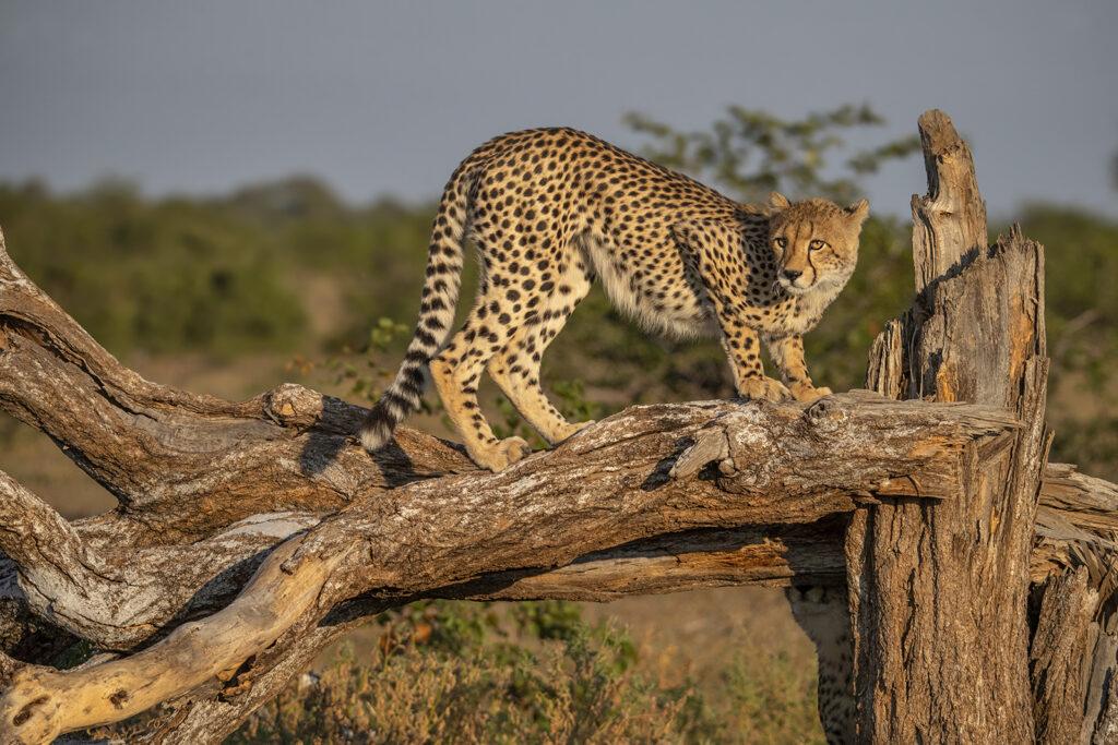 Kevin Dooley Wildlife photographer