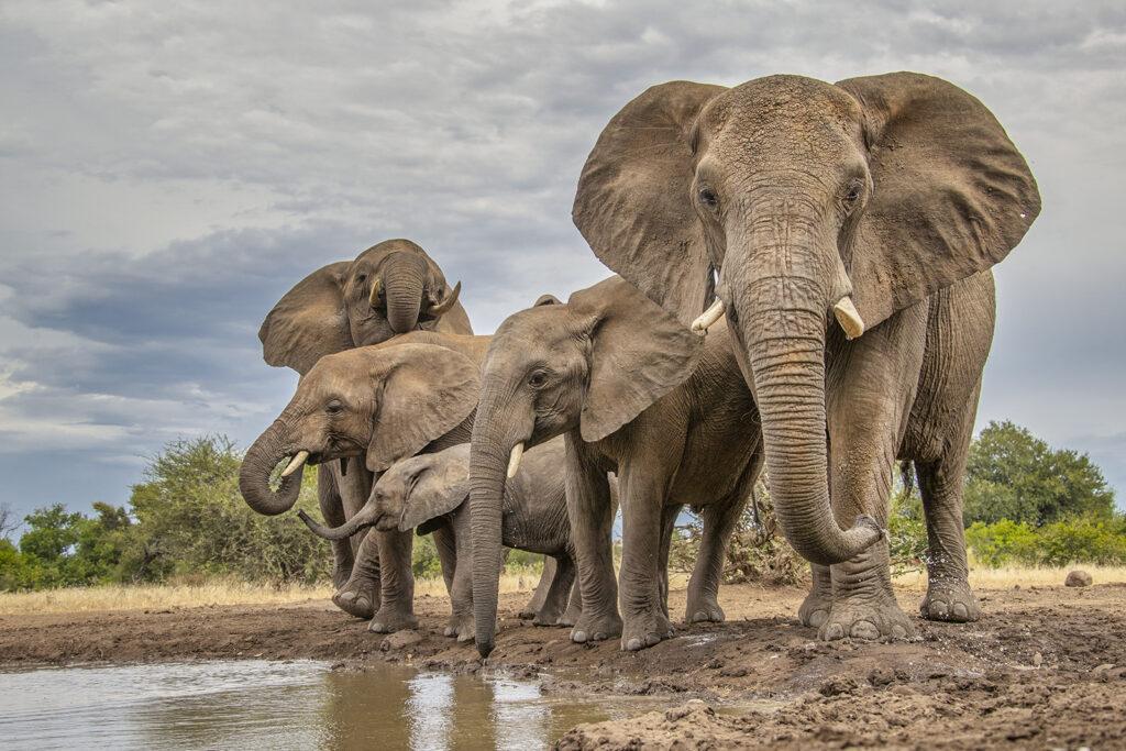 Photo Hide Elephants