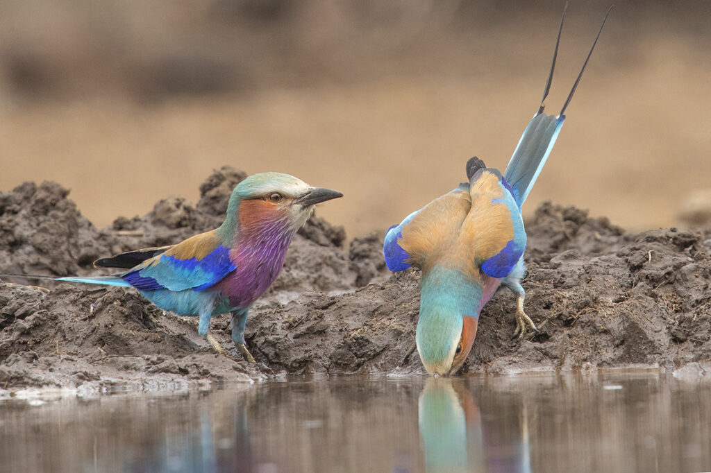 Best Wildlife photographers